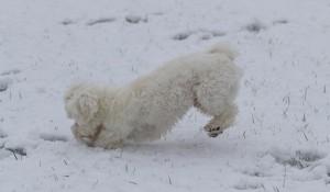 Cooper's eerste sneeuw